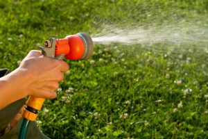 Morning Wins as Best Time to Water Plants in Summer