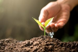 Creating Your Own Tree Watering System