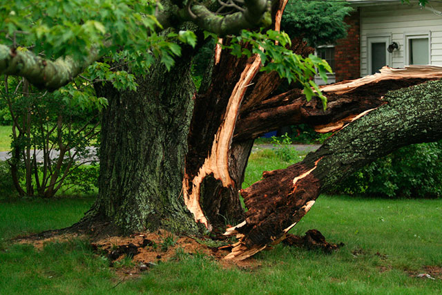 Tree Removal - ChopDoc.com