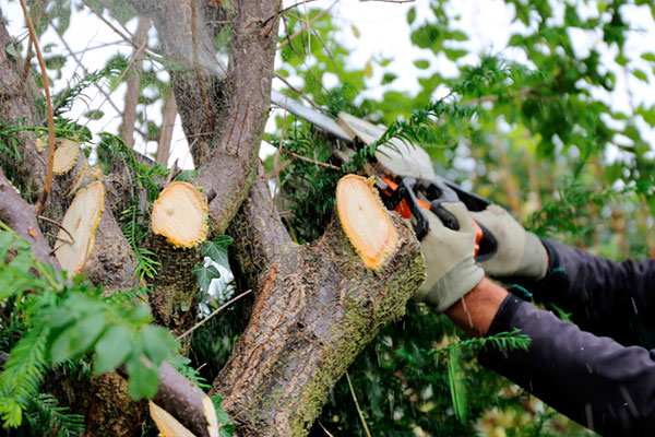 Tree pruning - ChopDoc.com