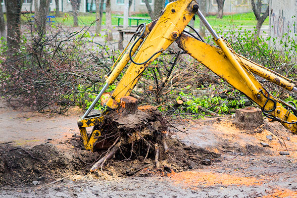 Stump Grinding - ChopDoc.com
