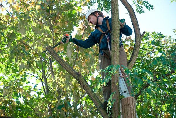 Tree Service in Auburn