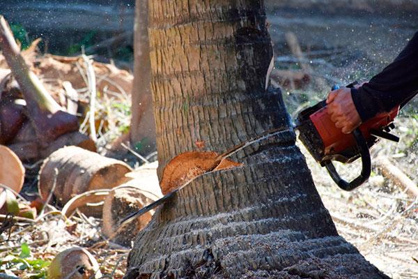 Chopdoc tree service