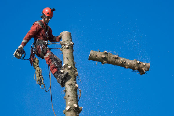 Chopdoc - Tree Services in Houston