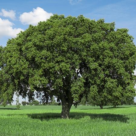 Storm Resistant Tree