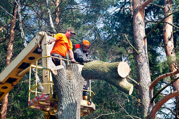 Tree Services - ChopDoc.com