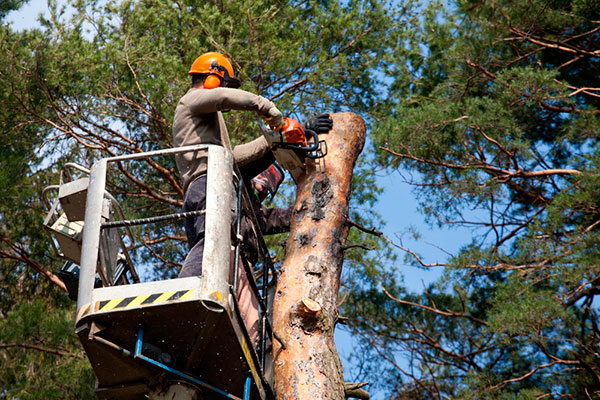 ChopDoc Tree Services
