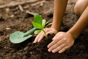 Tree Planting Tips You Don`t Know