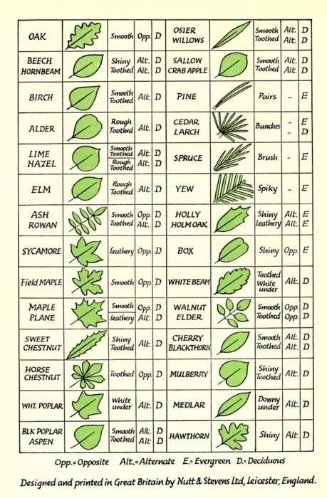 Leaf Identification Infographic