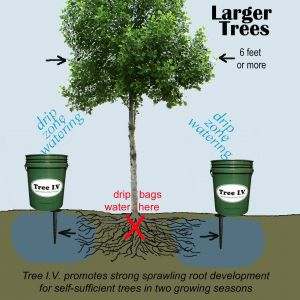 Tree Watering System