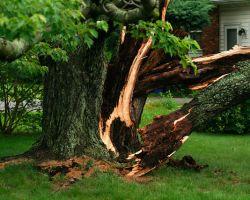 Tree Removal - ChopDoc.com