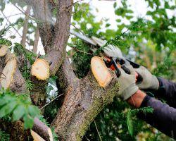 Tree pruning - ChopDoc.com