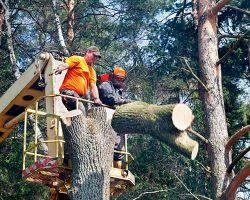 Tree Services - ChopDoc.com